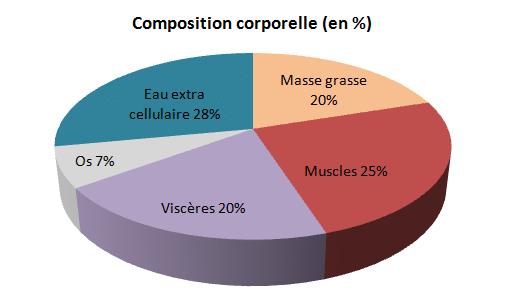 composition corporelle et diète cétogène