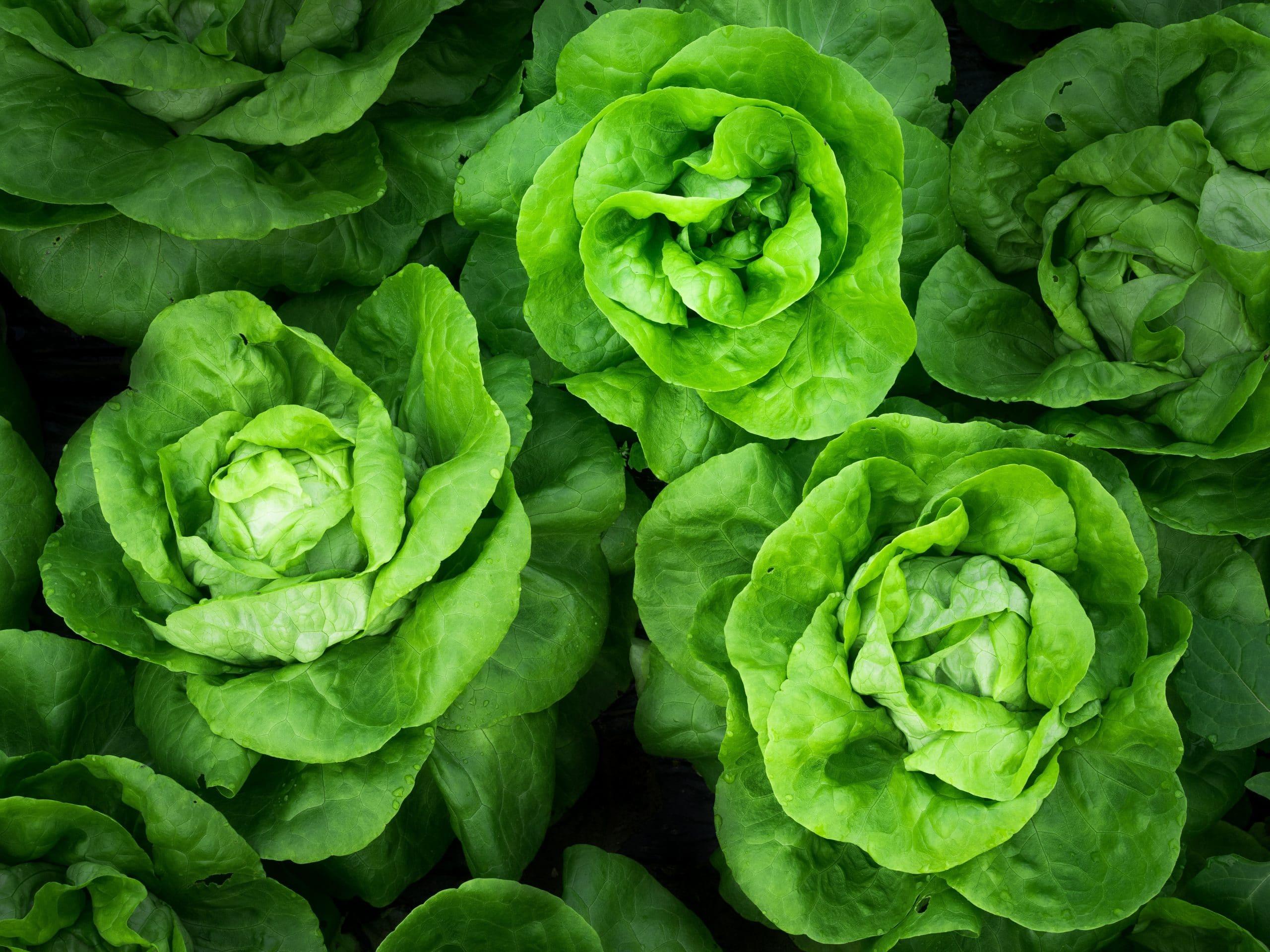 Les légumes verts et la diète cétogène